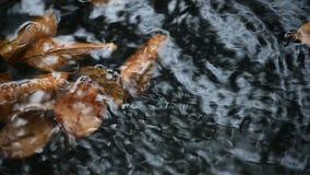 Getrocknete Blätter im Wasser mit dem Wassergießen stock video