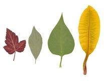 Getrocknete Blätter von verschiedenen Anlagen Stockfotografie