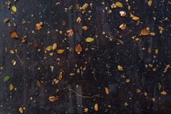 Getrocknete Blätter zerstreut auf die dunkle Holztischoberseite Lizenzfreies Stockbild