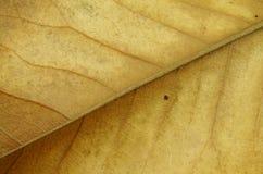 Getrocknete Blatt-Nahaufnahme Stockbild