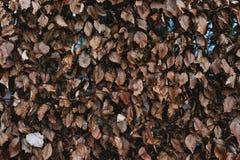 Getrocknete Blattbeschaffenheitshintergründe, im Winter Lizenzfreie Stockfotografie