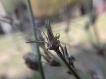Getrocknete Blume Stockfoto