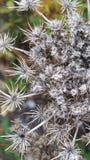Getrocknete Blume stockfotografie