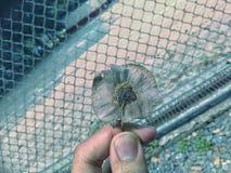 Getrocknete Blume Lizenzfreies Stockbild