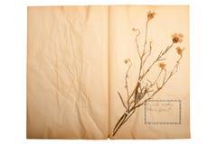 Getrocknete Blume auf altem, gegangenem gelbem Papier Lizenzfreies Stockfoto