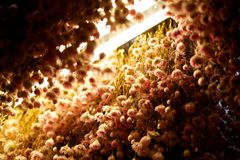 Getrocknete Blumen Stockfoto