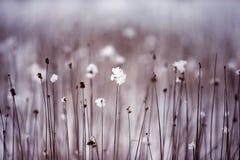 Getrocknete Blumen Lizenzfreies Stockbild
