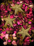 Getrocknete Blumen u. Goldsterne Stockfoto