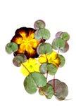 Getrocknete Blumenanordnung stockbilder
