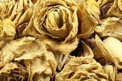 Getrocknete Blumenblätter von gelben Rosen Lizenzfreie Stockfotografie