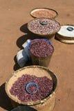 Getrocknete Bohnen in Malawi, Afrika Stockbild
