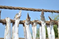 Getrocknete bumla Fische - Bombay-Entenfische Stockbilder