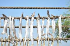 Getrocknete bumla Fische - Bombay-Entenfische Stockbild