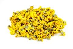 Getrocknete Chrysantheme Stockfotografie