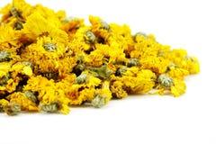 Getrocknete Chrysantheme Lizenzfreie Stockfotografie