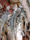 Getrocknete Eidechsen im Chineseshop in Kaschgar lizenzfreies stockbild