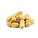 Getrocknete Erdnüsse herein auf Weiß Lizenzfreie Stockfotos