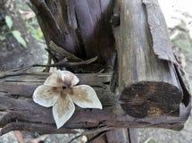 Getrocknete fallende Blume auf altem faulem Holz Lizenzfreies Stockbild