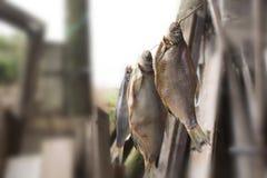 Getrocknete Fische Lizenzfreie Stockbilder