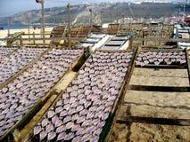 Getrocknete Fische Lizenzfreie Stockfotografie