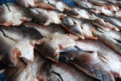 Getrocknete Fische Stockbild