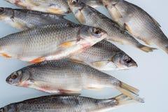 Getrocknete Fische Lizenzfreies Stockfoto