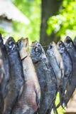 Getrocknete Fische Lizenzfreies Stockbild