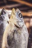 Getrocknete Fische Stockfotos