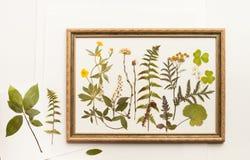 Getrocknete Forstpflanzen für Herbarium im Rahmen Stockbilder
