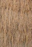 Getrocknete gekochte Reiskörner trockneten Hintergrund Stockfotografie