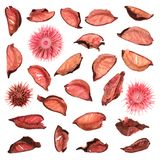 Getrocknete Gemischtrockenblumengesteckblätter lokalisiert Lizenzfreie Stockfotografie