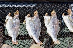 Getrocknete gesalzene Fische Lizenzfreie Stockfotos