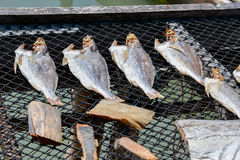 Getrocknete gesalzene Fische Stockfotos