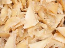 Getrocknete Haifischflossen lizenzfreies stockfoto
