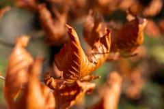 Getrocknete Herbstblätter lizenzfreie stockfotografie