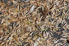 Getrocknete Herbstblätter stockfoto