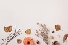 Getrocknete Herbstpflanzen und trocknen Blätter mit leerem Raum Lizenzfreie Stockfotografie