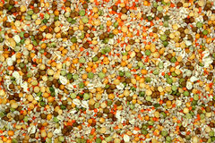 Getrocknete Impulse Stockfoto