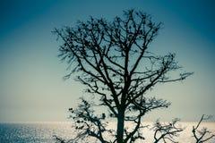 Getrocknete Kiefer gegen den Himmel und das blaue Meer Lizenzfreie Stockfotos