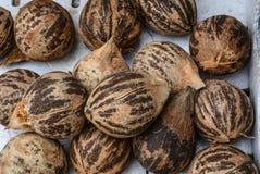 Getrocknete Kokosnussfrüchte für Verkauf am ländlichen Markt lizenzfreies stockbild