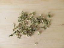 Getrocknete Kräuter der Schafgarbe, Achillea-millefolium Stockfoto
