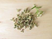 Getrocknete Kräuter der Schafgarbe, Achillea-millefolium Stockfotografie