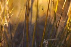 Getrocknete Landschaftsanlagen Lizenzfreie Stockfotografie