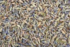 Getrocknete Lavendelblumen auf dem Tisch besprüht Lizenzfreie Stockfotografie