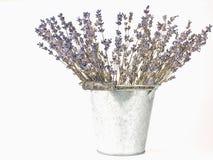 Getrocknete Lavendelzweige Lizenzfreies Stockbild
