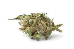 Getrocknete Marihuanaknospe mit sichtbarem THC Stockbilder