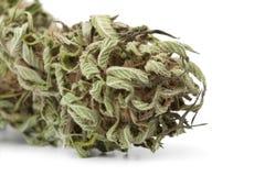 Getrocknete Marihuanaknospe mit sichtbarem THC Lizenzfreies Stockbild