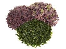 Getrocknete Meerespflanzen-Mischung - gesunde Nahrung lizenzfreies stockfoto