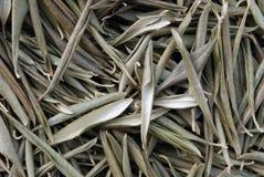 Getrocknete Olivenblätter Stockfotografie