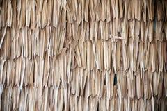 Getrocknete Palmenbeschaffenheit Stockbilder